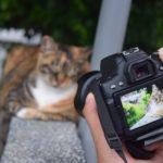 【カルチャーショック】台湾・猫村 猫がたくさんいる「猫の楽園」近年人気急上昇中?!! アクセス方法なども紹介!